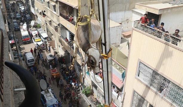 Konya'da mantar zehirlenmesi: 2 �l�, 26 ki�i tedavi alt�nda