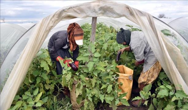 Ticarette Konya ve Kıbrıs arasında Hava harekatı