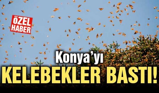 Atiker Konyaspor'a 'seyircisiz oynama' cezası