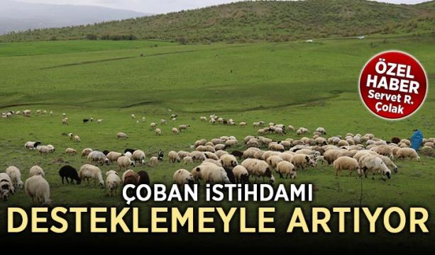 Çoban istihdamı desteklemeyle artıyor (Özel Haber)