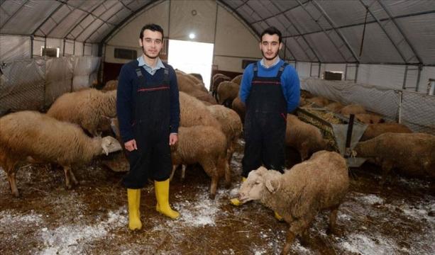 İkizlerin kendi hayvanlarının çobanı olma hayali Bakanlık projesiyle gerçek oldu
