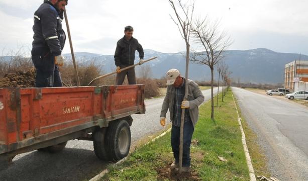 Akşehir Belediyesi'nden ağaçlandırma ve budama çalışmaları