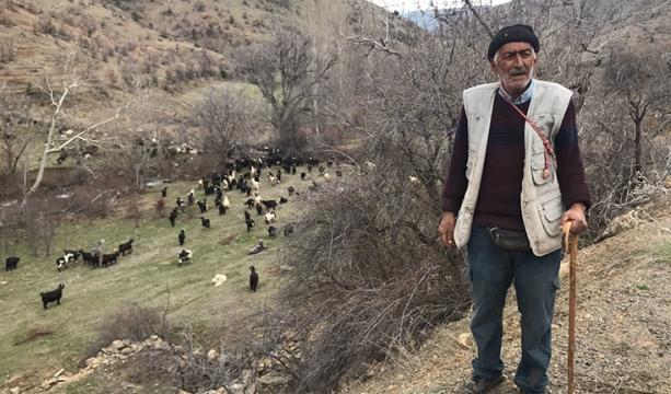 Toroslar'ın 40 yıllık çobanının bitmek bilmeyen meslek aşkı