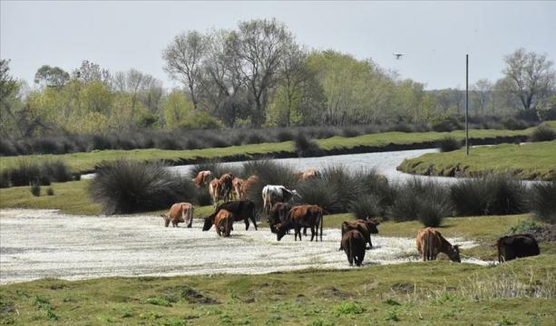 Kızılırmak Deltası Kuş Cenneti ilkbaharda bir başka güzel