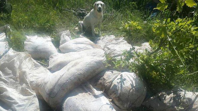 Bitlis'te terör örgütüne ait 2 ton 50 kg amonyum nitrat ele geçirildi