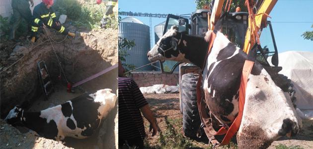 Kuyaya düşen inek kurtarıldı