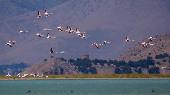 Van Gölü'nde flamingolar görsel şölen sunuyor