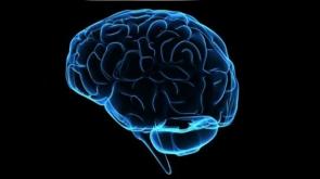 Bağırsak mikropları beyni etkiliyor olabilir