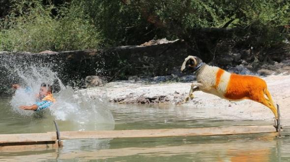 Sudan Koyun Geçirme Yarışması başladı