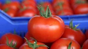 Rusya'ya domates ihracatı ile ilgili açıklama!