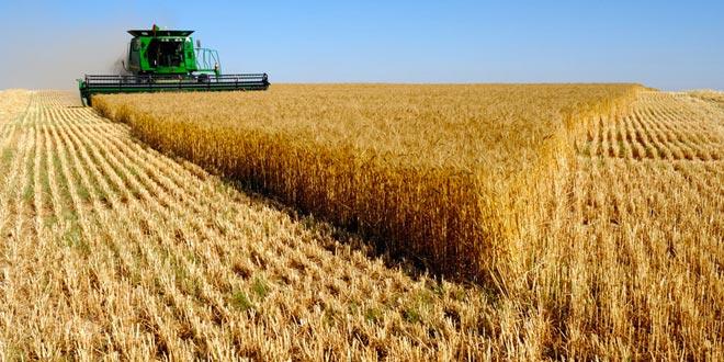 Konya Haber Sitesi:  Konya Ticaret Borsası Arpa Buğday Fiyatları