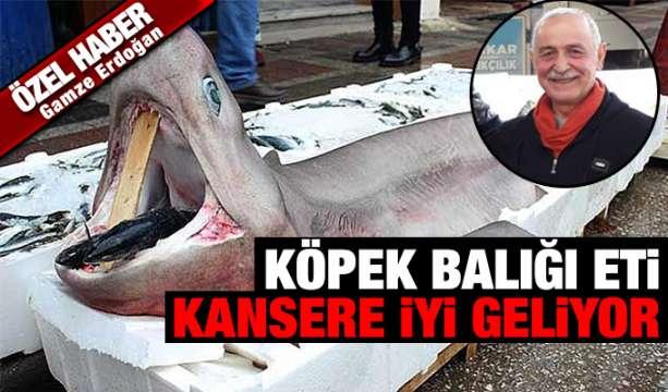 Konya Haber:  Köpek Balığı Eti Kansere İyi Geliyor  #ÖzelHaber