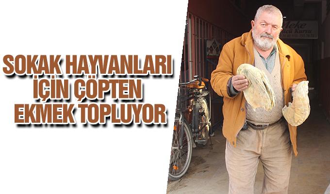 Konya Haber:  Konya'da Sokak hayvanları için çöpten ekmek topluyor