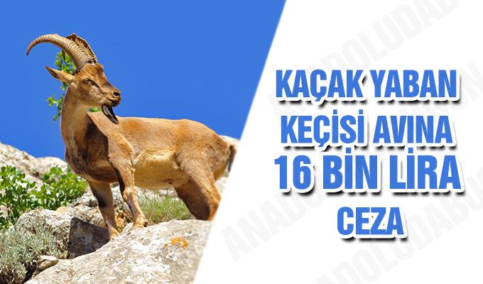 Konya Haber:  Konya'da Kaçak yaban keçisi avına 16 bin lira ceza