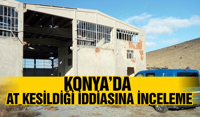 Konya Haber: Konya'da at kesildiği iddiasına inceleme
