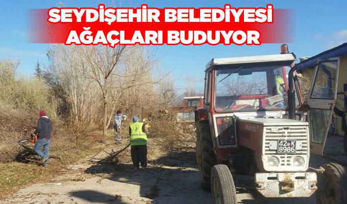 Konya Haber: Konya Seydişehir Belediyesi ağaçları buduyor