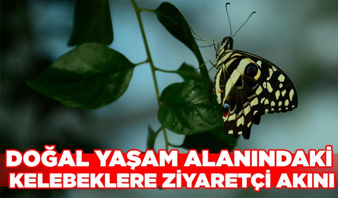 Konya Haber: Konya'da doğal yaşam alanındaki kelebeklere ziyaretçi akını