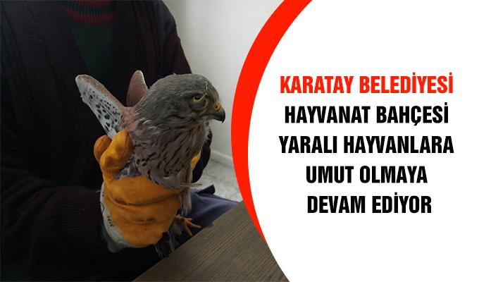 Konya Haber: Karatay Belediyesi Hayvanat Bahçesi Yaralı Hayvanlara Umut Olmaya Devam Ediyor