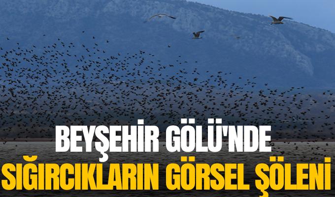 Konya Haber: Konya Beyşehir Gölü'nde sığırcıkların görsel şöleni