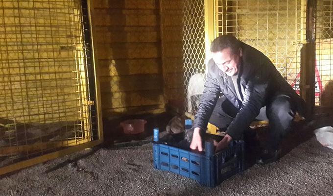 Başkan Tutal yavru  köpekleri besledi