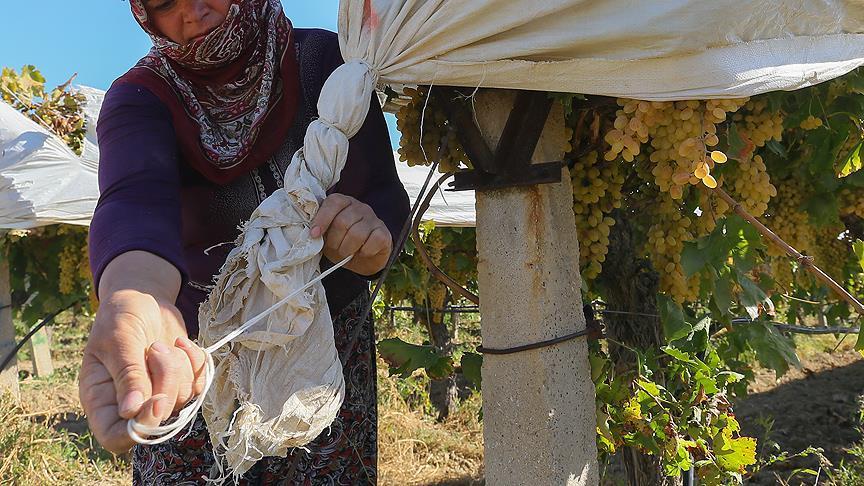 Tarım sigortalarında kadınlara ve gençlere yüzde 5 indirim müjdesi