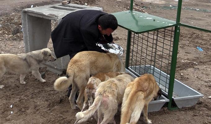 Çumra'da sokak hayvanlarına sahip çıkılıyor