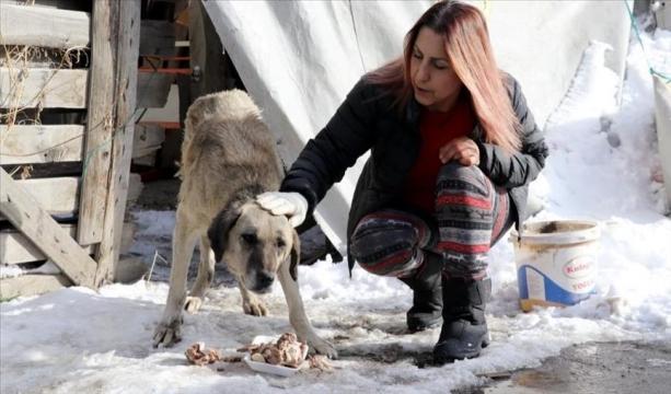 Hayvan dostu profesör 20 yıldır sokak hayvanlarını besliyor
