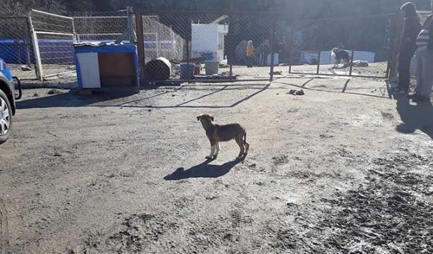 Seydişehir'de hayvan barınağına saldırı