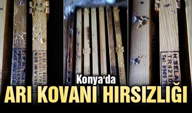 Konya'da arı kovanı hırsızlığı