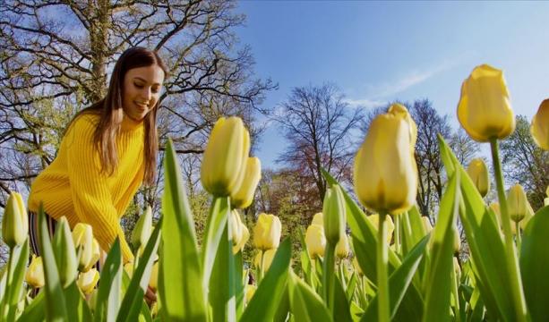 Hollanda'da 'çiçeğin gücü' teması ile lale zamanı