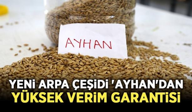 Yeni arpa çeşidi 'Ayhan'dan yüksek verim garantisi