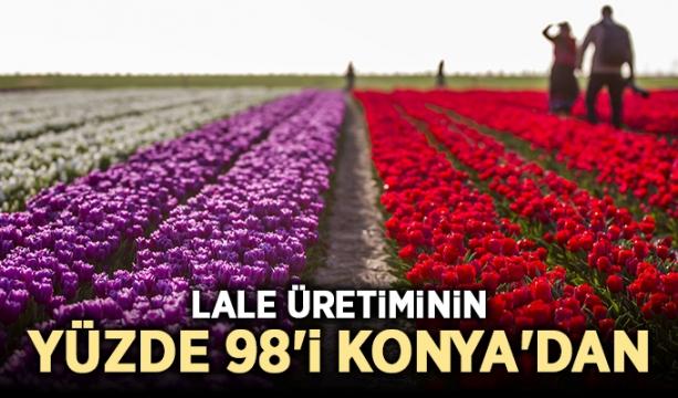 Lale üretiminin yüzde 98'i Konya'dan